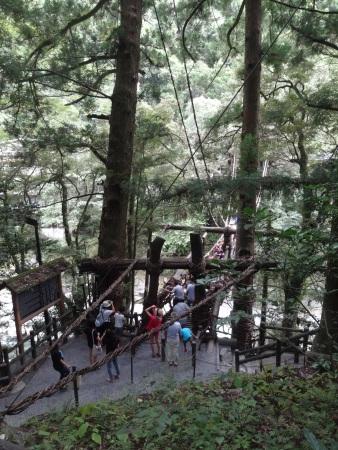 藤蔓吊橋的入口